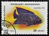 MADAGASCAR - CIRCA 1994: stamp printed in Madagascar dedicated to fish shows cichlasoma biocellatum, circa 1994 — Stock Photo