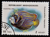 MADAGASCAR - CIRCA 1994: stamp printed in Madagascar dedicated to fish shows pomacanthus imperator, circa 1994 — Stock Photo