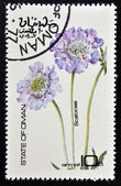 OMAN - CIRCA 1977: stamp printed in Oman dedicated to flowers shows Scabiosa, circa 1977 — Foto de Stock