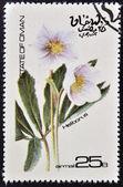 OMAN - CIRCA 1977: stamp printed in Oman dedicated to flowers shows Heliborus, circa 1977 — Stock Photo