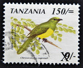 TANZANIA - CIRCA 1990: A stamp printed in Tanzania shows the emerald cuckoo bird (Chrysococcyx cupreus), circa 1990 — Stock Photo