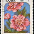 A stamp printed in Cuba dedicated to mother´s day shows image of a Peonies — 图库照片
