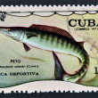 Stock Photo: Stamp printed in Cubdedicated to sport fishing, shows wahoo, Acanthocybium solandri