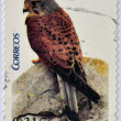 Stock Photo: Stamp printed in Spain shows kestrel