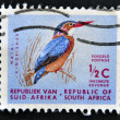A stamp printed in RSA shows natal kingfisher — Stok fotoğraf