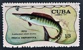 Známka vytištěna na kubě pro sportovní rybolov, ukazuje wahoo, acanthocybium solandri — Stock fotografie