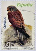 A stamp printed in Spain shows kestrel — Stock Photo