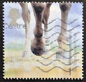 En stämpel som tryckt i storbritannien visar hästar hovar (trans penine trail, derbyshire) — Stockfoto