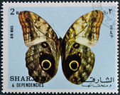 A stamp printed in Sharjah shows butterfly — Stock Photo