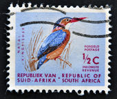 A stamp printed in RSA shows natal kingfisher — Stock Photo