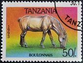 Razítko v tanzanii ukazuje bulon koně — Stock fotografie
