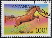 A stamp printed in Tanzania shows Anglo-arab horse — Stock Photo