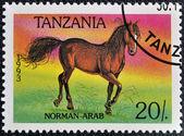 Un sello impreso en tanzania muestra caballo norman-árabe — Foto de Stock