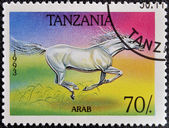 A stamp printed in Tanzania shows Arab horse — Stock Photo