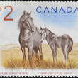 图库照片: CANAD- CIRC2005: stamp printed in Canadshows two sable island horses ,circ2005