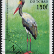 CHAD - CIRCA 1998: A stamp printed in Chad shows ephippiorhynchus senegalensis, circa 1998 — Stock Photo