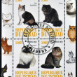 CHAD - CIRCA 2010: A stamp printed in Republic of Chad shows different cat breeds, serie, circa 2010 — Foto de Stock