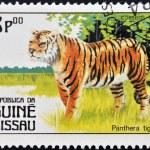 GUINEA BISSAU - CIRCA 1984: A stamp printed in Guinea shows panthera tigris, circa 1984 — Stock Photo