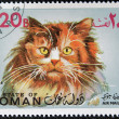 OMAN - CIRCA 1971: stamp printed in State of Oman shows Turkish Angora cat, circa 1971 — Zdjęcie stockowe