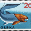 POLAND - CIRCA 1966: A stamp printed in Poland shows Dinichthys from the series Dinosaurs, Prehistoric Vertebrates, circa 1966 — Stock Photo