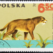 POLAND - CIRCA 1966: A stamp printed in Poland shows Machairodus from the series  Dinosaurs, Prehistoric Vertebrates, circa 1966 — Stock Photo