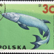 POLAND - CIRC1966: stamp printed in Poland shows Eusthenopteron from series Dinosaurs, Prehistoric Vertebrates, circ1966 — Stock Photo #14183580