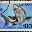 TANZANIA - CIRCA 1995: A stamp printed in Tanzania showing Longnose sawshark, circa 1995 - Stock Photo