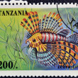 TANZANIA - CIRCA 1995: A stamp printed in Tanzania showing Zebrafish, circa 1995 — Stock Photo