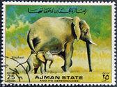 MANAMA AJMAN - CIRCA 1967: a stamp printed in Ajman shows Elaphant, circa 1967 — Stockfoto