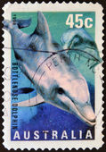 AUSTRALIA - CIRCA 1998: A stamp printed in Australia shows Bottlenose Dolphin, circa 1998 — Stock Photo