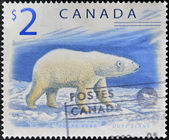 CANADA - CIRCA 1998: A stamp printed in Canada shows a Polar Bear, Ours blanc, circa 1998 — Stock Photo