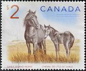 CANADA - CIRCA 2005: A stamp printed in Canada shows two sable island horses ,circa 2005 — Stock Photo