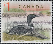 CANADA - CIRCA 1998: A stamp printed in Canada shows a Loon, Huard, circa 1998 — Zdjęcie stockowe