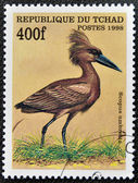 CHAD - CIRCA 1998: A stamp printed in Chad shows scopus umbretta, circa 1998 — Stock Photo