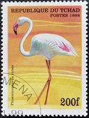 CHAD - CIRCA 1998: A stamp printed in Chad shows phoenicopterus ruber, circa 1998 — Stock Photo