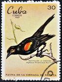 CUBA - CIRCA 1969: A stamp printed in cuba dedicated to fauna of the Zapata swamp shows bobolink the swamp, circa 1969 — 图库照片