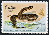 CUBA - CIRCA 1969: A stamp printed in cuba dedicated to fauna of the Zapata swamp shows catibo, circa 1969 — Foto de Stock