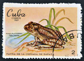 CUBA - CIRCA 1969: A stamp printed in cuba dedicated to fauna of the Zapata swamp shows banana frog, circa 1969 — ストック写真