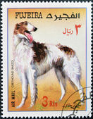 FUJEIRA - CIRCA 1980: A stamp printed in Fujeira dedicated to dogs, shows greyhound barzoi, circa 1980 — Stock Photo