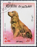 FUJEIRA - CIRCA 1980: A stamp printed in Fujeira dedicated to dogs, shows cocker spaniel, circa 1980 — Stock Photo