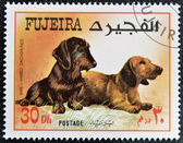 FUJEIRA - CIRCA 1980: A stamp printed in Fujeira dedicated to dogs, shows wire haired and dachshunds, circa 1980 — Stock Photo