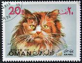 OMAN - CIRCA 1971: stamp printed in State of Oman shows Turkish Angora cat, circa 1971 — Stock Photo