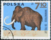 POLAND - CIRCA 1966: A stamp printed in Poland shows Mammoth from the series Dinosaurs, Prehistoric Vertebrates, circa 1966 — Stock Photo