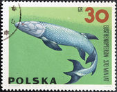 POLAND - CIRCA 1966: A stamp printed in Poland shows Eusthenopteron from the series Dinosaurs, Prehistoric Vertebrates, circa 1966 — Stock Photo