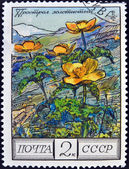 USSR - CIRCA 1976: A stamp printed in Russia shows a pulsatilla aurea, circa 1976 — Stockfoto