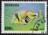 TANZANIA - CIRCA 1995: A stamp printed in Tanzania showing Surgeon-fish, circa 1995 — Stock Photo