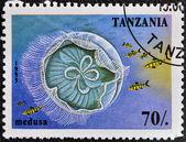 Tanzanya - yaklaşık 1995: damga basılmış denizanası, 1995 dolaylarında gösterilen Tanzanya — Stok fotoğraf
