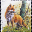 A stamp printed in Belgium shows fox (Vulpes vulpes) - Foto Stock