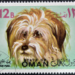 Stamp printed in Omshows Bichon Maltese dog breed — Stock Photo #14696113
