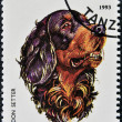 A stamp printed in Tanzania shows Gordon Setter - Foto Stock